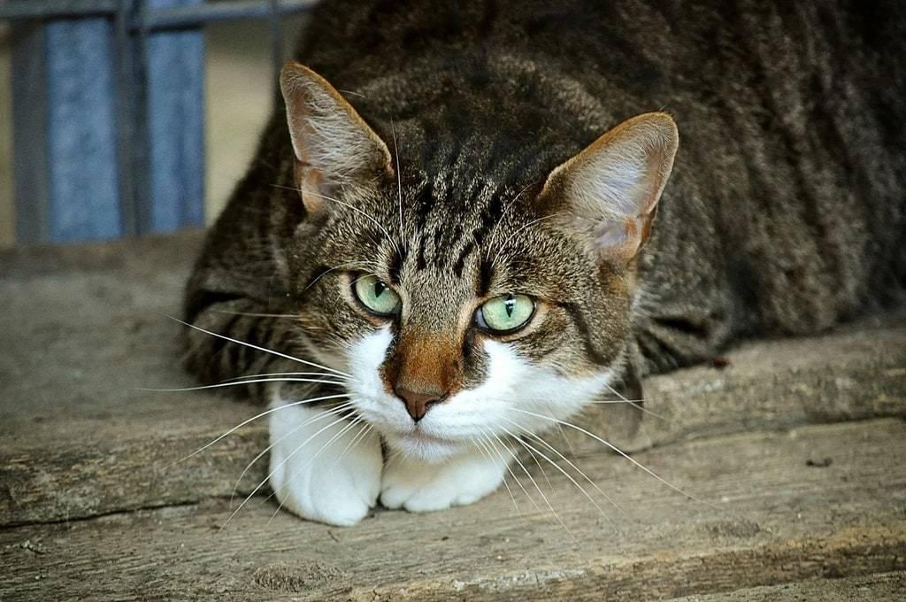 Comment soulager la douleur à la patte de mon chat ?